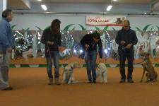 Cani e conduttori allineati e pronti per una lezione di obbedienza