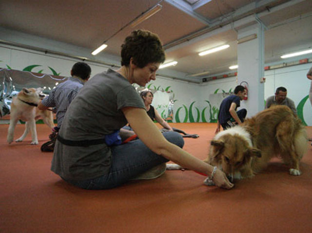 Conduttrice premia il suo cane con un bocconcino alla fine di un esercizio