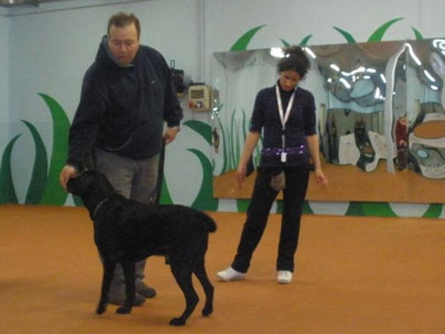 Conduttore da un bocconcino al suo cane sotto la supervisione dell'istruttrice