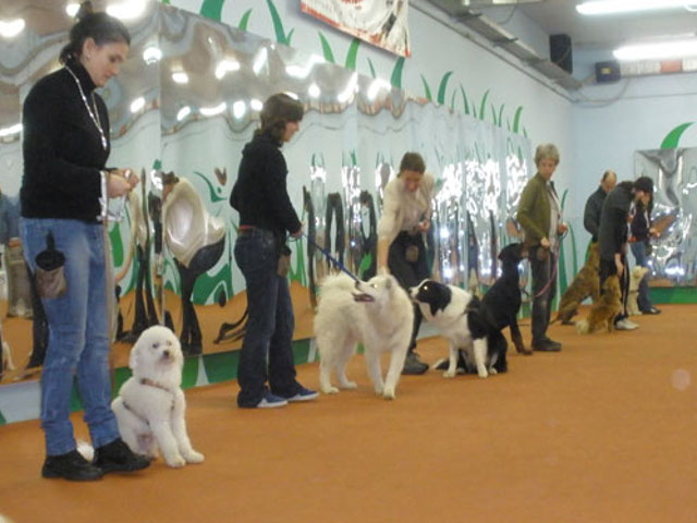 Cani e conduttori allineati in attesa di iniziare un esercizio