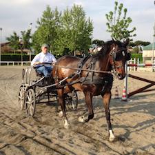 Giulio Tronca conduce cavallo e calesse durante una gara