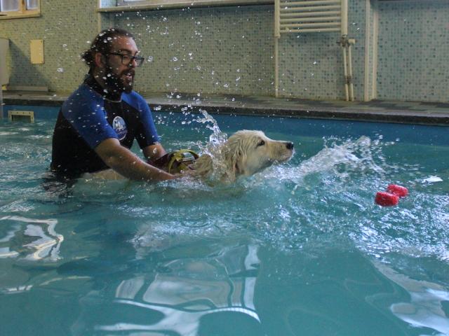 L'istruttore sostiene un cane mentre nuota in piscina
