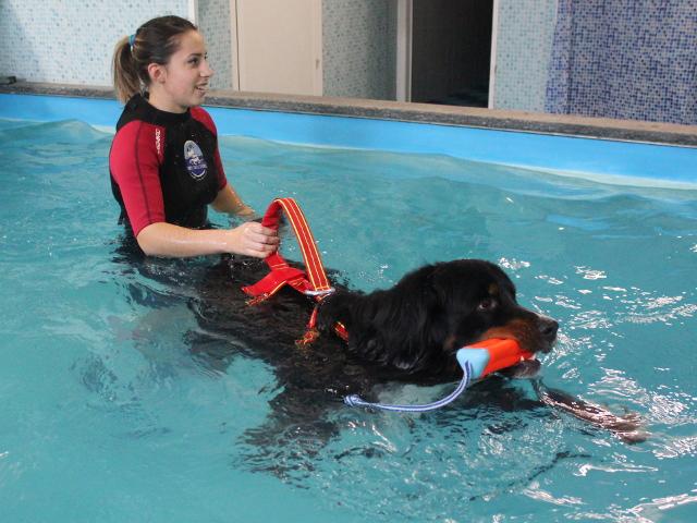 L'istruttore fa giocare in acqua un cane terranova