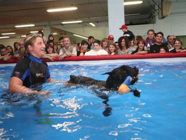 Alla presenza di numerosi osservatori, l'istruttrice guida l'attività di un cane in piscina