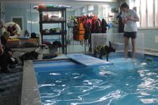Istruttore con cane a bordo piscina