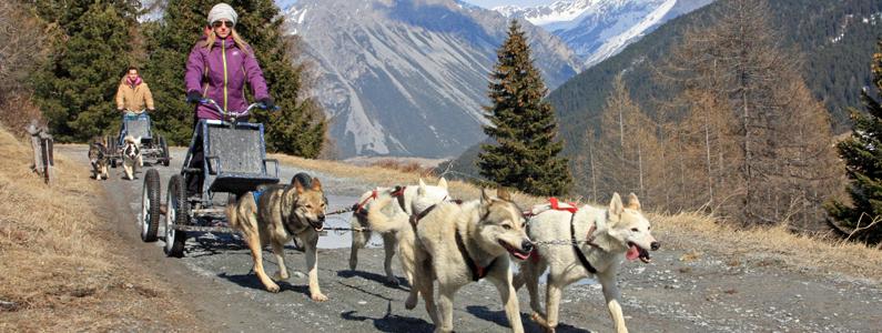 Muta di cani husky traina un kart a ruote lungo un sentiero di montagna