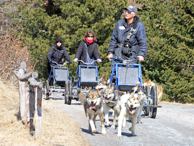 Tre kart trainati da cani husky guidati dai turisti lungo un sentiero di montagna