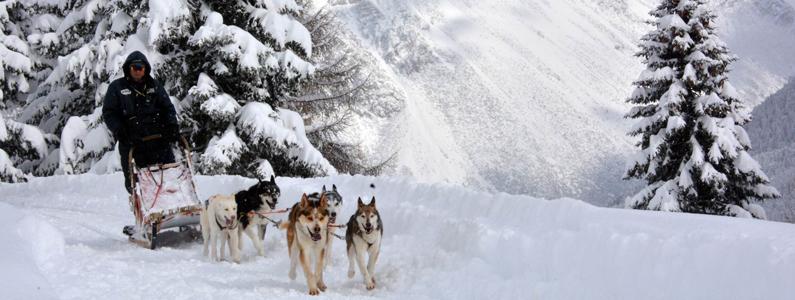 Muta di cani husky traina una slitta in un innevato sentiero di montagna