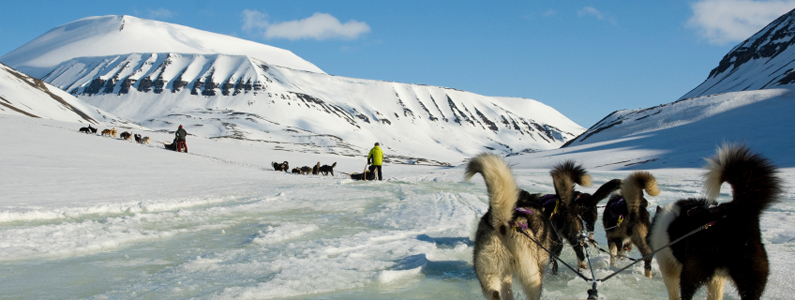 Cani da slitta trainano un uomo lungo una pianura innevata
