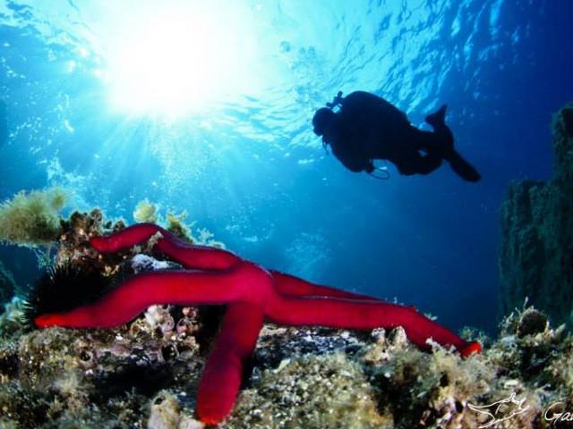 Stella marina adagiata sul fondale con sub in lontananza