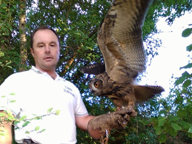 rapace con ali spiegate sul gaunto dell'addestratore