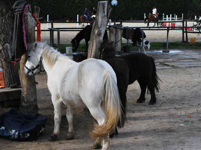 Cavalli in attesa di essere sellati