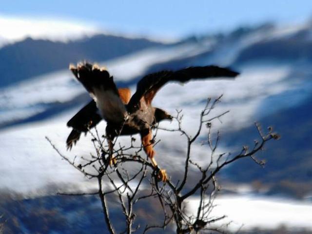 falco con ali spiegate appoggiato sul ramo di un albero