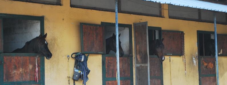 Cavalli affacciati alle finestre dei propri box