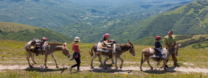Gruppo di asini e persone in cammino su paesaggio estivo
