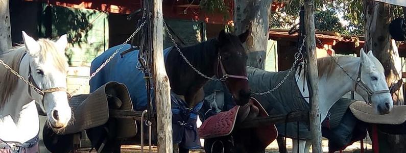 Cavalli davanti ai box
